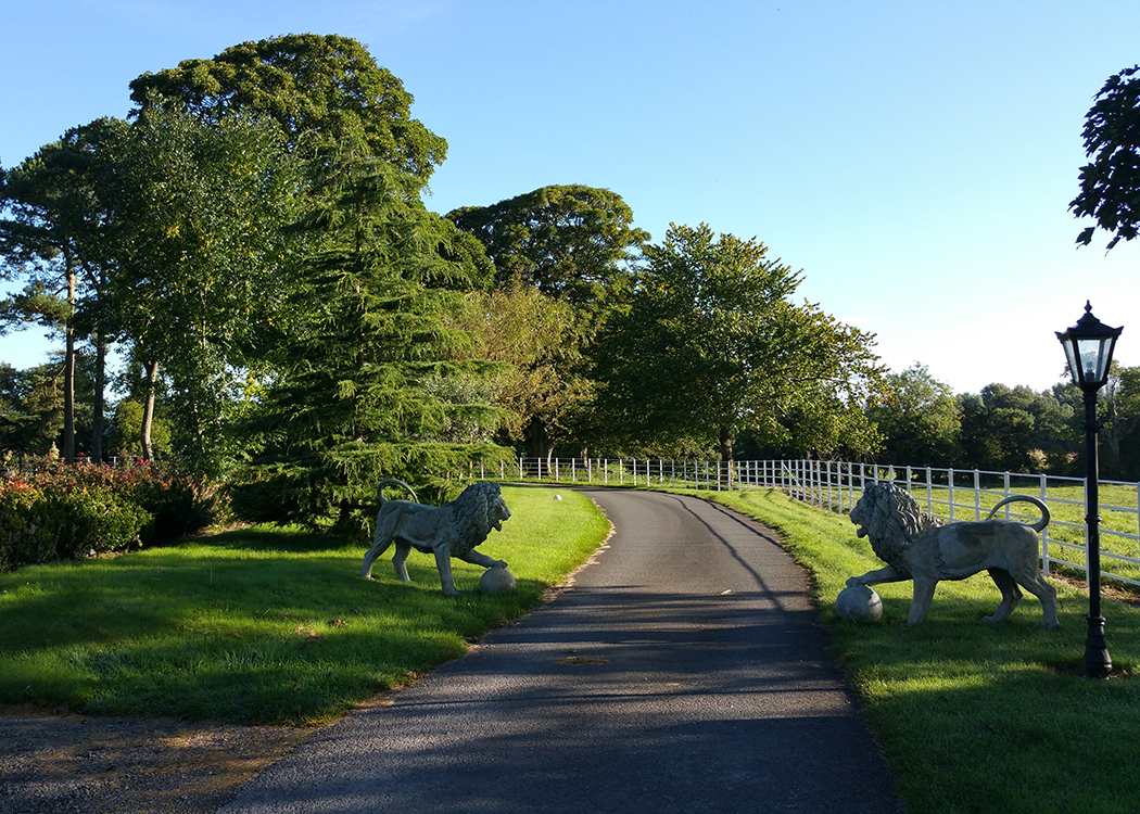 11-Boyne-View-the-lions-in-the-morning-sun