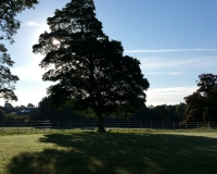 13-Boyne-View-front-garden-morning-sun