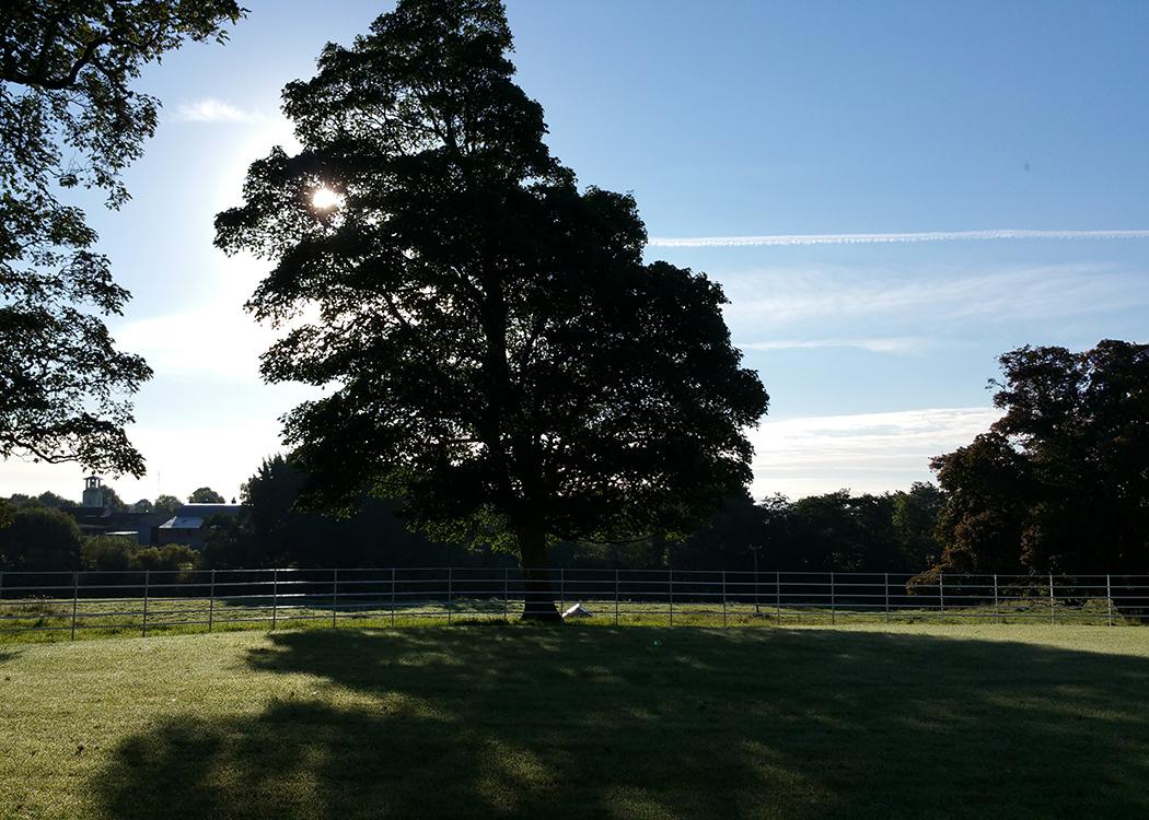 Boyne View front garden morning sun