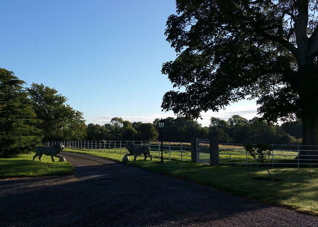 Boyne View lions in morning sun trees and shadows